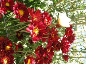 campo_flores (9)